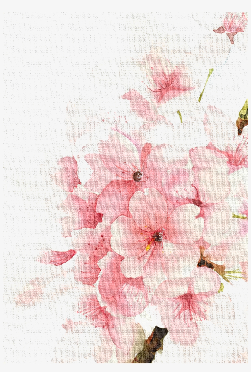 Cherry Watercolour Watercolor Blossoms Flowers Painting Rose
