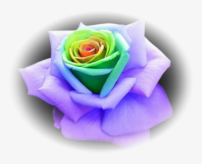 Hence, & You Shall Love Hashem Your Elohim - Unique Multi Colored Roses, transparent png #7647091