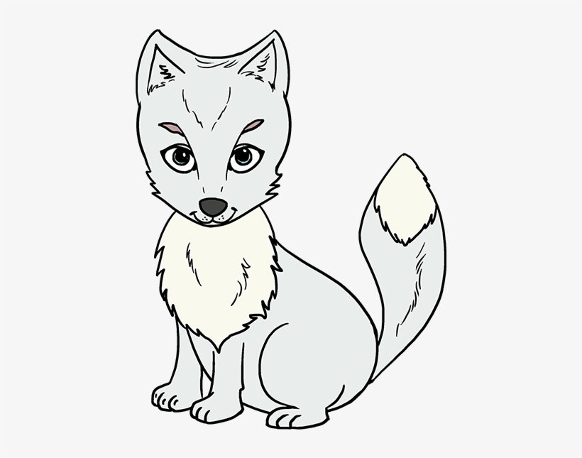 How To Draw Arctic Fox