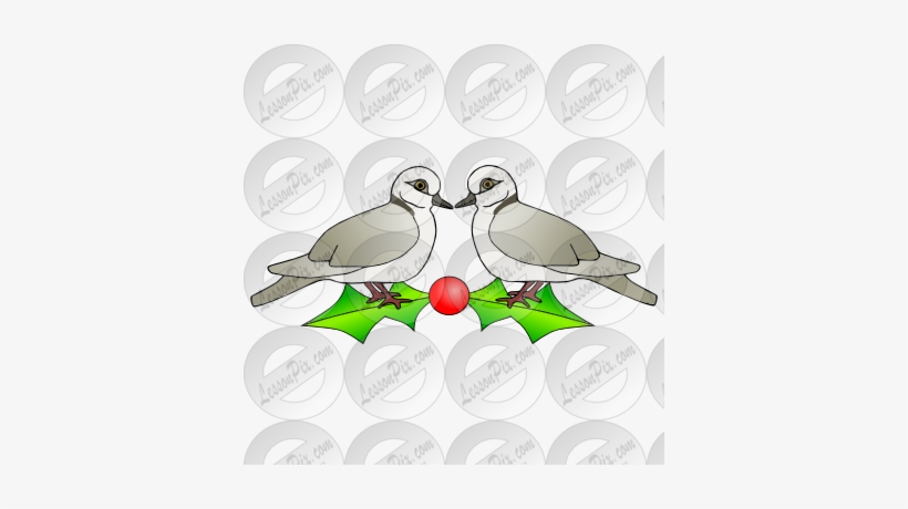 Two Turtle Doves Picture For Classroom / Therapy Use - Pigeons And Doves, transparent png #771348
