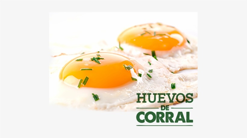 Eggs And Nutrition - Fried Eggs, transparent png #779103