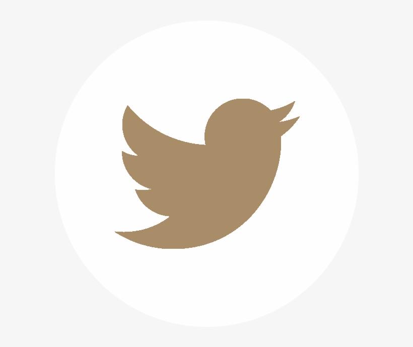 Follow Us - - Social Media Icons Vector Twitter, transparent png #7721796