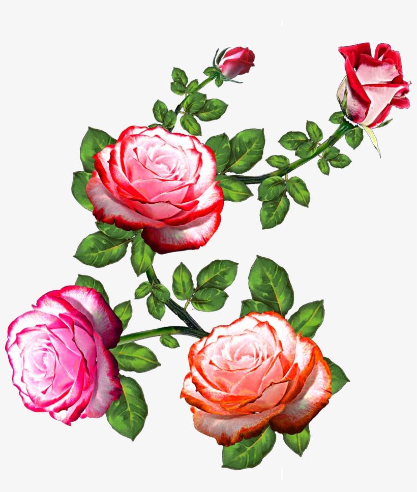 Vector,flower,vector Art,flower Vector,vector Flower - Flower Rose, transparent png #7733323