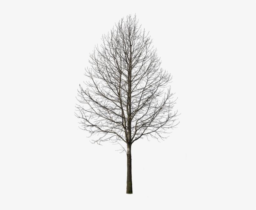 Com Tree Plan Photoshop, Photoshop Rendering, Tree - Deciduous Tree, transparent png #785559