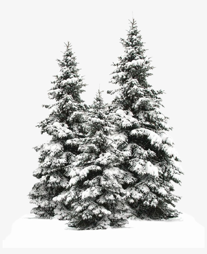 Tree Trees Christmas Christmastree Snow Winter Wintertr - Snowy Pine Trees Drawing, transparent png #7897741