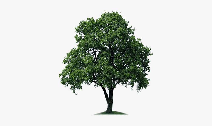Download Free High Quality Tree Png Transparent Images - Tree Png