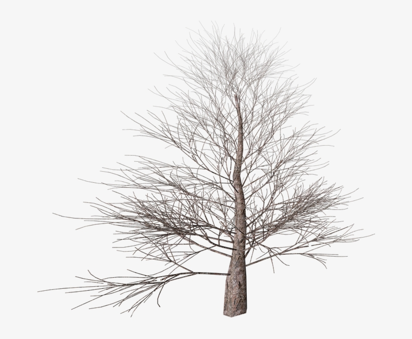 Tree, Png, Isolated, Autumn, Digital Art, Nature - Winter Tree Transparent Background, transparent png #798535
