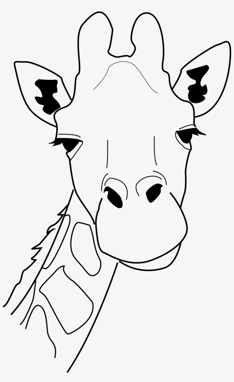 Giraffe Head Line Drawing 241412 900×1,425 Pixels - Line ...