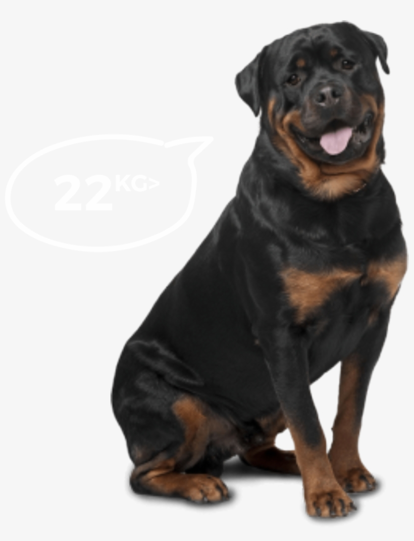 Big Dogs - Bi-monthly - Best Dog For Home Security And Kids, transparent png #80749