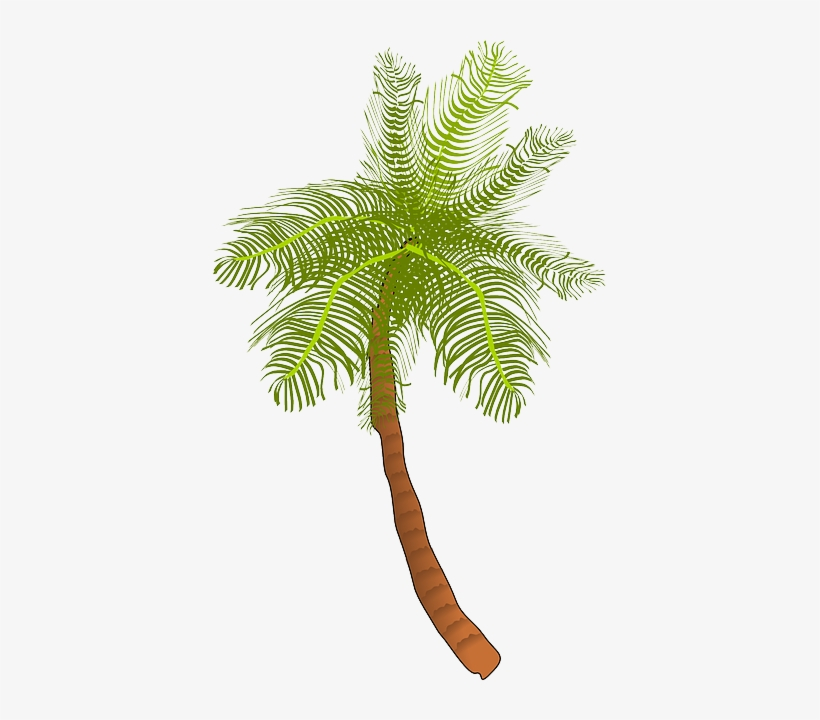 Palm, Tree, Ocean, Summer, Vacation, Beach, Palm Leaf - Coconut Tree Clip Art, transparent png #82903