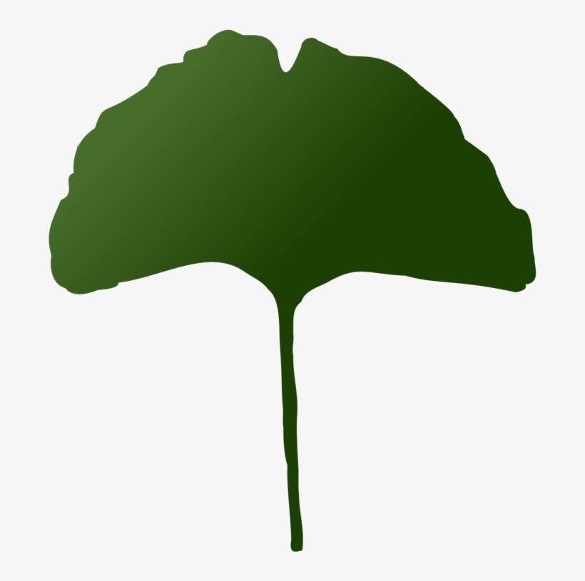 Leaf Maidenhair Tree Plants Palm Trees - Maidenhair Tree, transparent png #83417