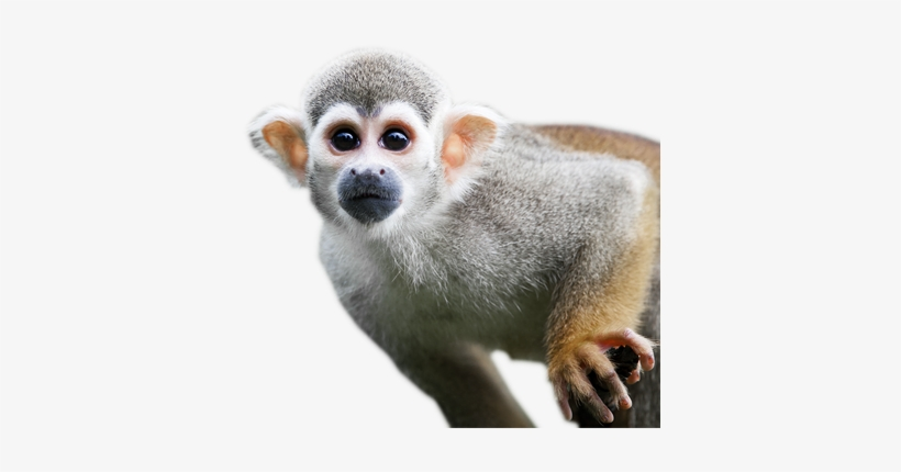 Monkey Png Images Free Download Banner Free Download - Monkeys In The Rain Forest, transparent png #85769