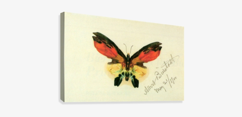 Butterfly 2 By Bierstadt Canvas Print - Iphone 4/4s Case: Butterfly 2, transparent png #88921
