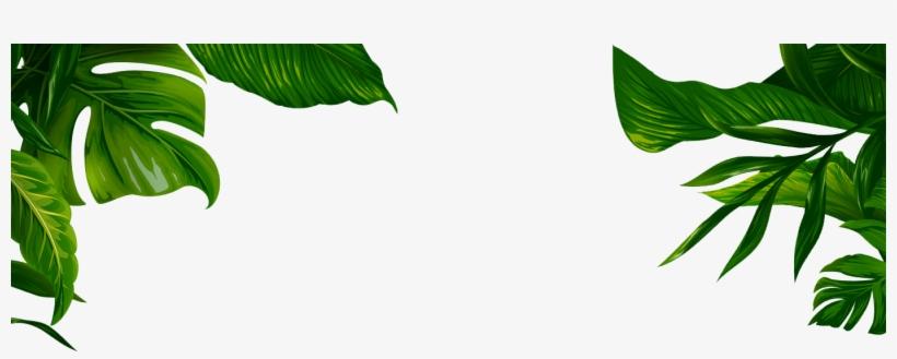 Jungle Transparent Leaves - Banana Leaf Illustration Png, transparent png #802170