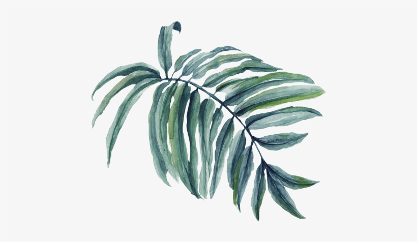 The Significance Of The Palms And Cloaks - Palm Tree Branch Png Watercolor, transparent png #809616