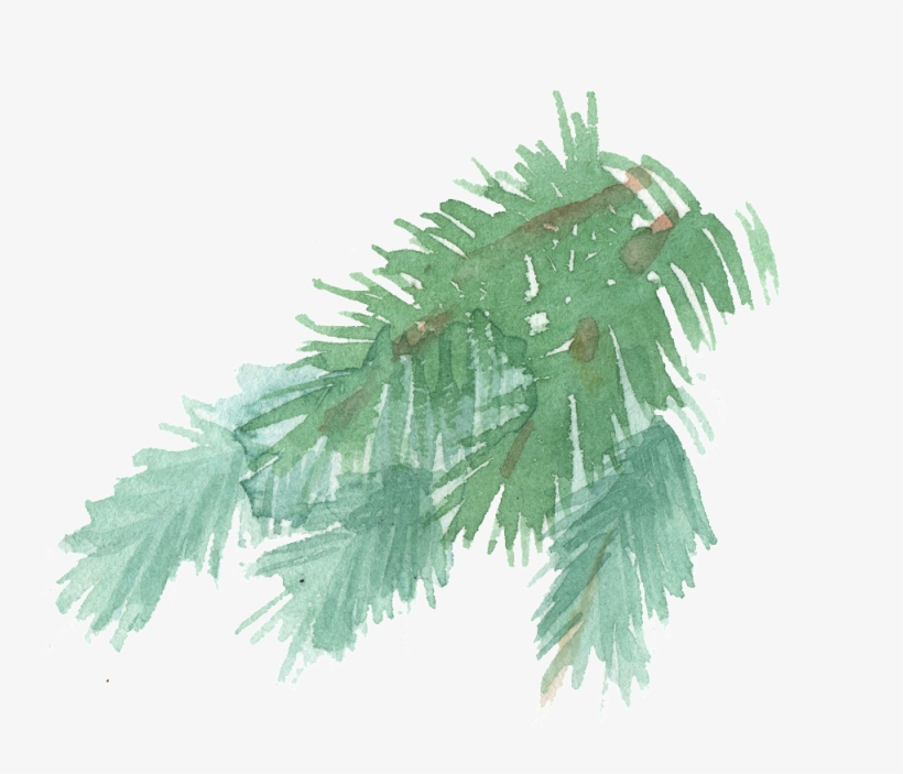 Hand Painted A Few Pine Tree Branches Watercolor Transparent - Pine, transparent png #809652