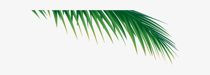 Go To Image - Palm Tree Branch Png, transparent png #809760