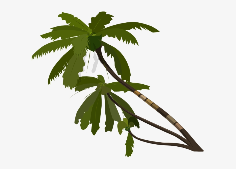 Vector Palm Trees Clip Art - Palm Tree Transparent Clipart, transparent png #809908