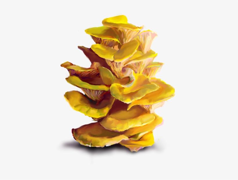 Bonus Topics - Yellow Oyster Mushroom Png, transparent png #8017012