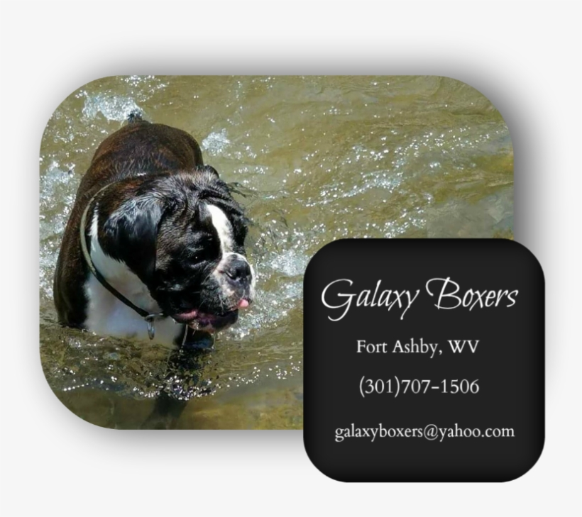Boxer Puppies For Sale In Pa - Olde English Bulldogge - Free
