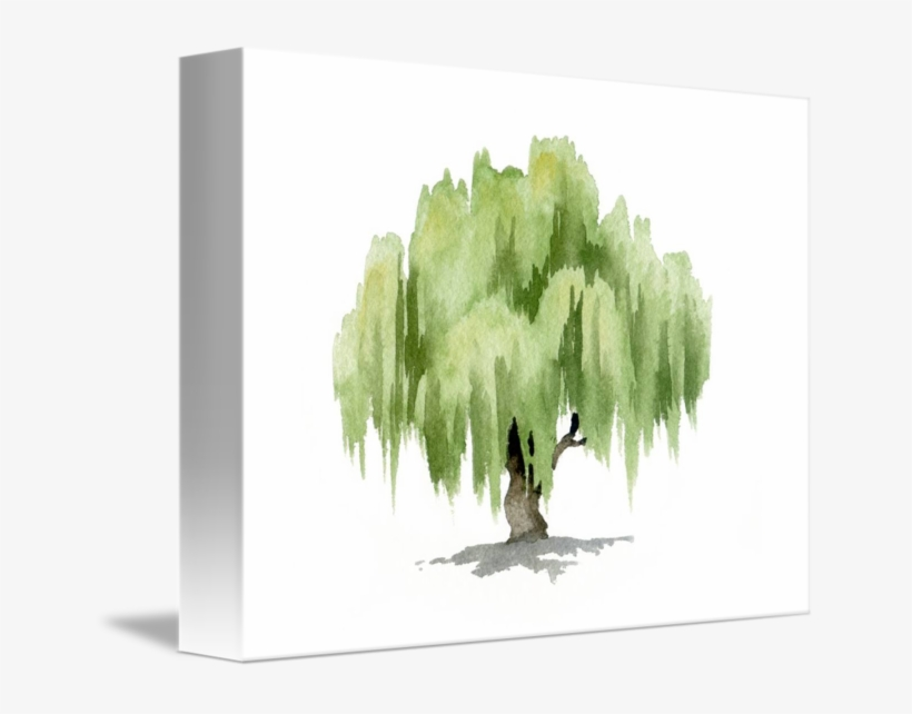 Willow Tree By David Rogers - Watercolor Willow Tree, transparent png #8048514