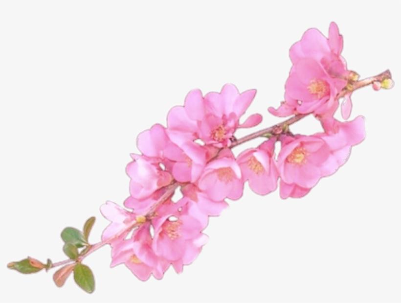 Clip Art Flower Overlay - Flower Overlays For Edits - Free