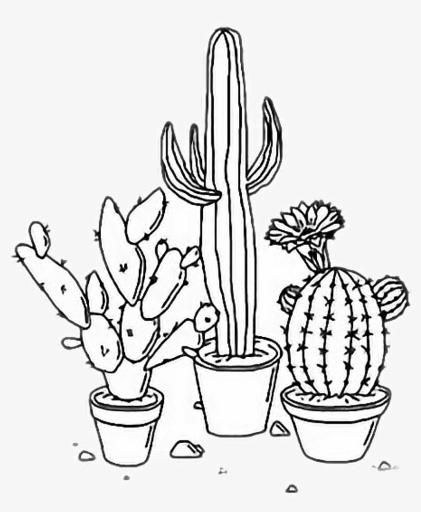Cactus aesthetic. Plants tumblr outline freetoedit