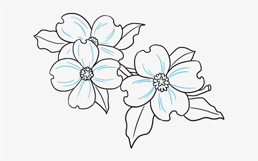 How To Draw Dogwood Flowers - Easy Dogwood Flower Drawing, transparent png #8171016