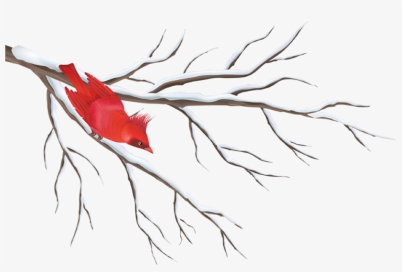Free Png Winter Branch With Bird Png - Winter Berry Tree Drawing, transparent png #8260015
