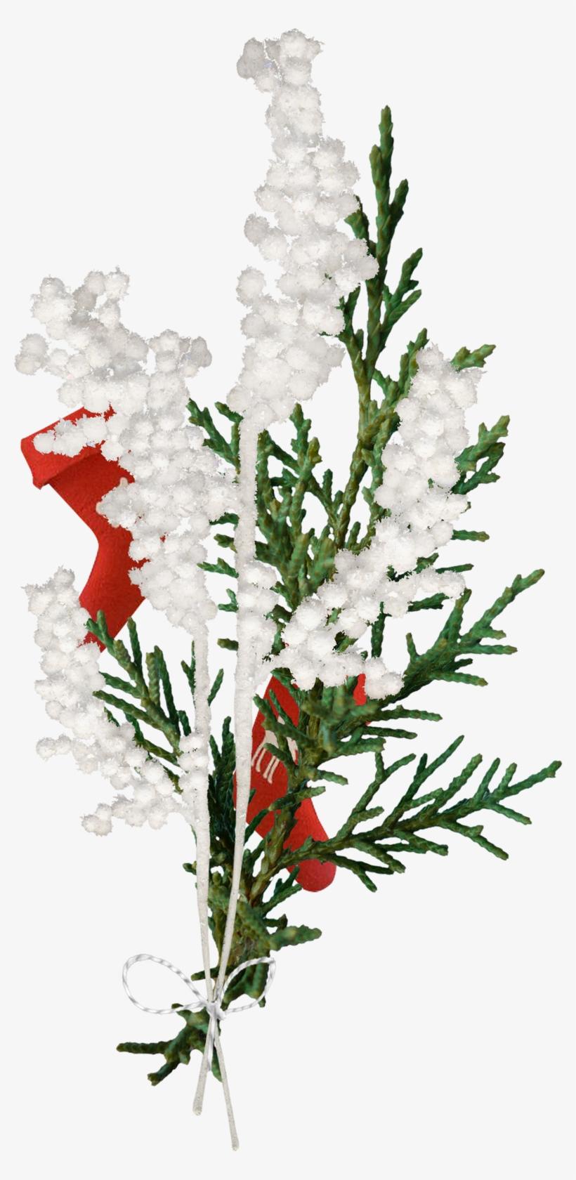 Фото, Автор Manul На Яндекс - Christmas Tree, transparent png #8275258