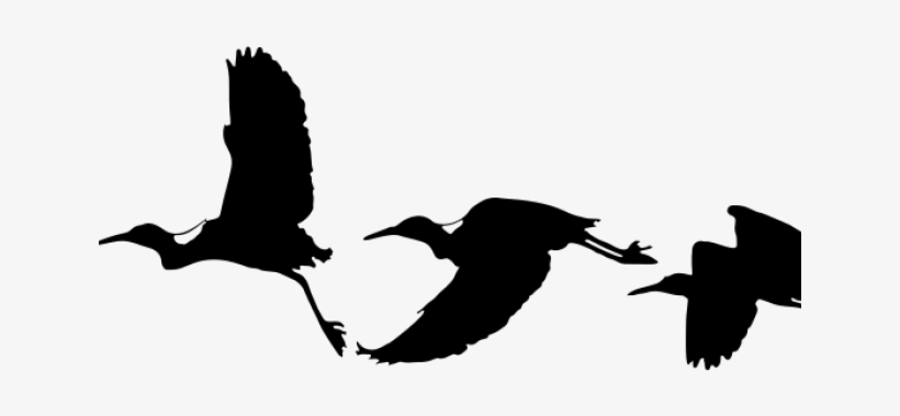 Migration Clipart Flying Bird - Drawing Birds Silhouette Flying, transparent png #8297392