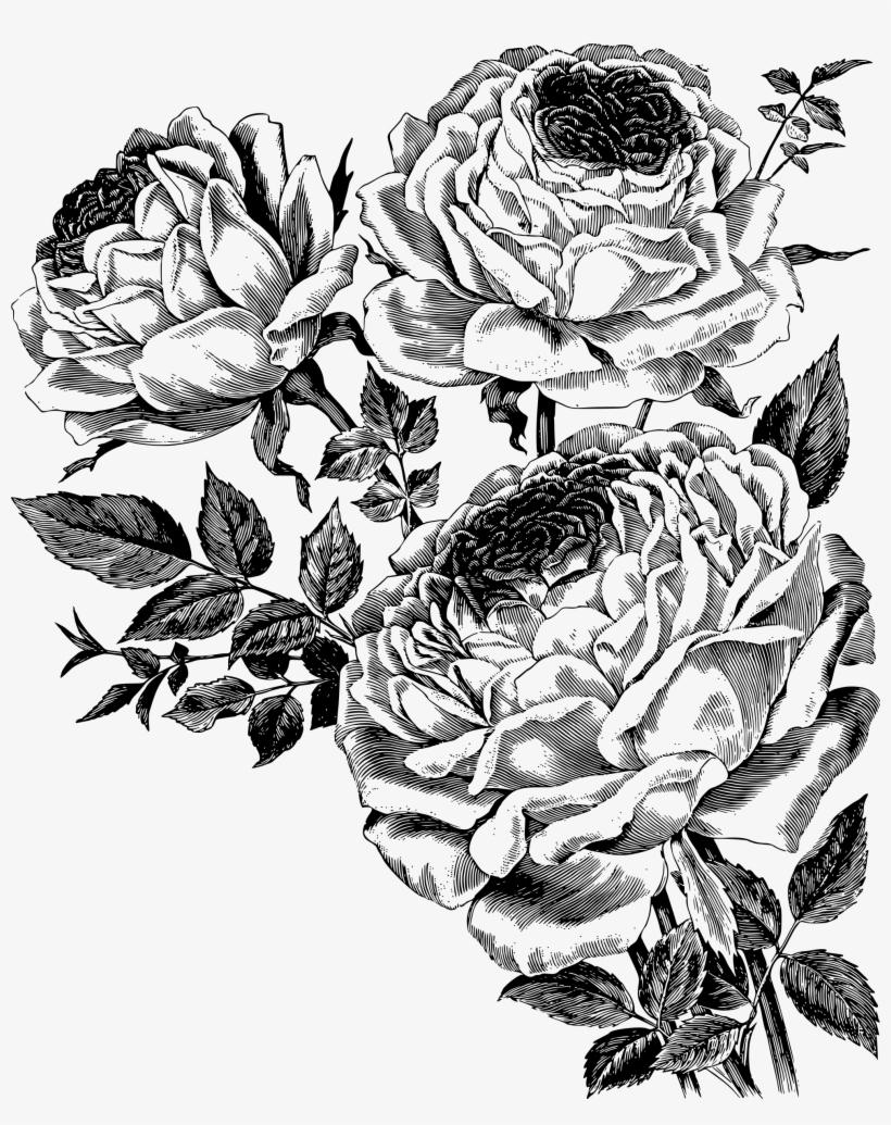 Rose Vector Png Download Free Roses Vector Png Free Transparent