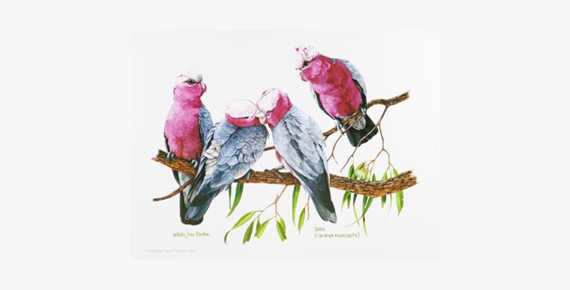 Ashdene Placemat Birds Of Australia Galah - Placemats Cork Backed Set Of 6 Birds, transparent png #832641