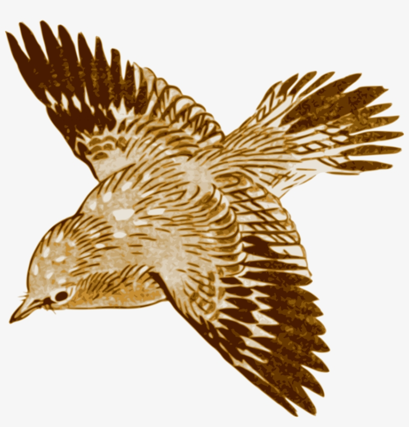 Free Png Download Flying Brown Birds Png Images Background - Brown Bird Flying Clipart, transparent png #8300017
