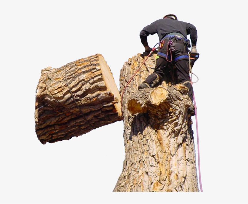 Jeffs Tree Home Page Tree Overlay - Tree Stump, transparent png #8337286
