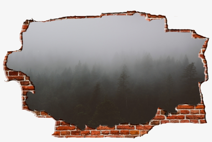 Zapwalls Decals Morning Forest Cloudy Sky Breaking - New York City, transparent png #8354585