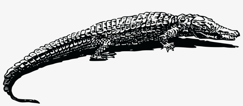 View Crocodile Clipart Black And White