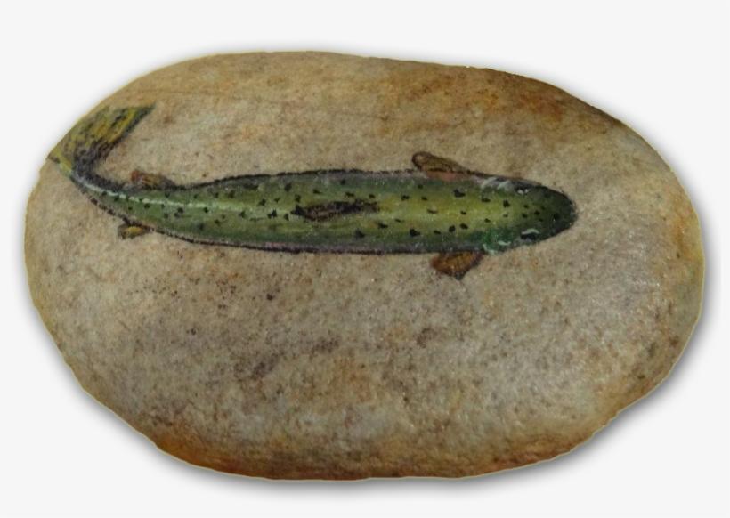 Painted Rock $15 - Trout Painted Rock, transparent png #843530