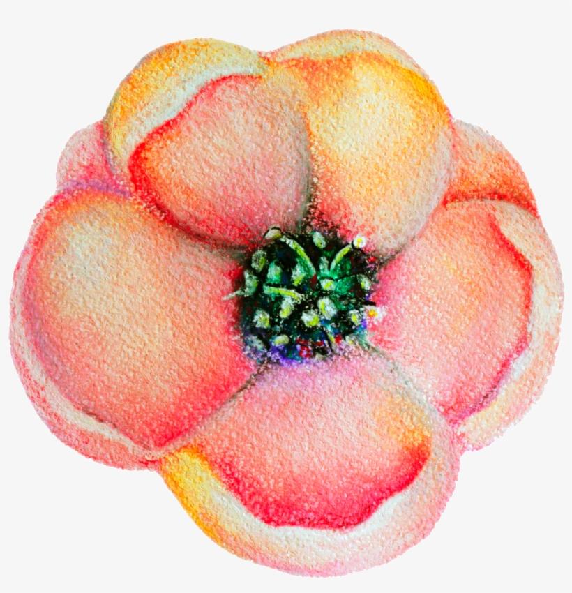 Spring Flower Bloom Decoration Vector This Backgrounds - Flowering Dogwood, transparent png #8453165