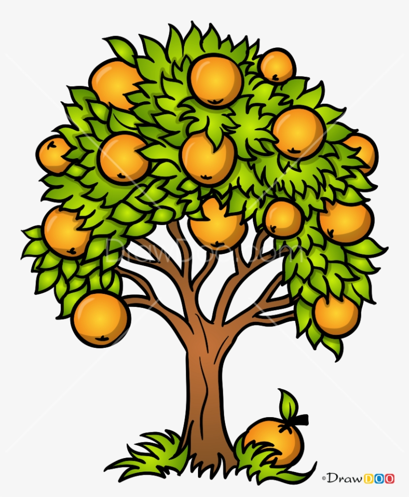 How To Draw An Orange Tree With How To Draw Orange - Draw Orange Tree, transparent png #8457117