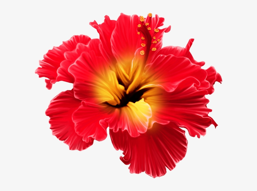 Фото, Автор Svetlera На Яндекс - Tropical Flowers Transparent Png, transparent png #8481810