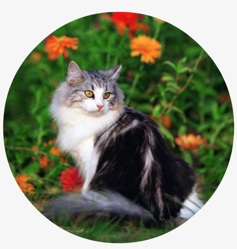 Cute Cat Playing In The Beautiful Field Of Flowers - Cat, transparent png #852909