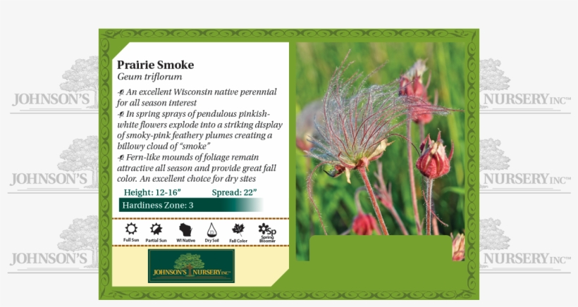 Prairie Smoke, Three-flowered Avens, Old Man's Whiskers - Prairie Smoke, transparent png #8551328