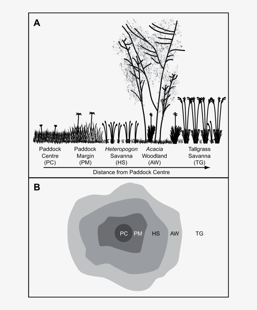 Schematic Cross-section And Top View (b) Of The Vegetation - Diagram, transparent png #8568046