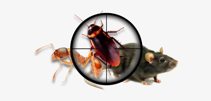 Home And Business - Pest Control Services Png, transparent png #862648