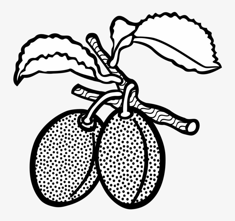Line Art Plum Drawing Computer Icons Fruit