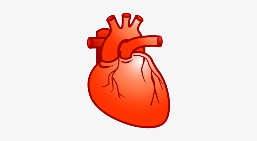 Real Heart Heart Cardiology Plastic Xp Icon Gallery - Real