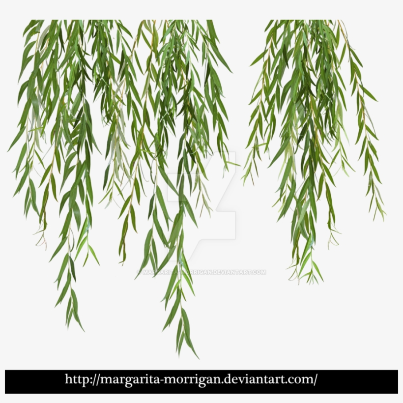 Branches By Margarita Morrigan - Willow Tree Leaves Png, transparent png #879182