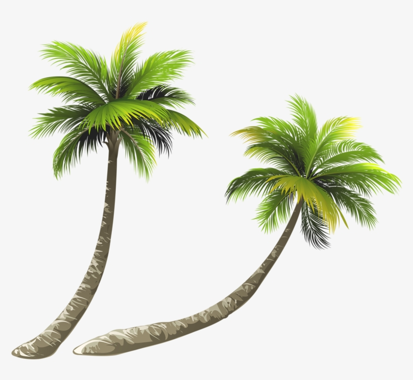 Arecaceae Coconut Royalty-free Illustration - Coconut Tree Png Clipart, transparent png #8713422