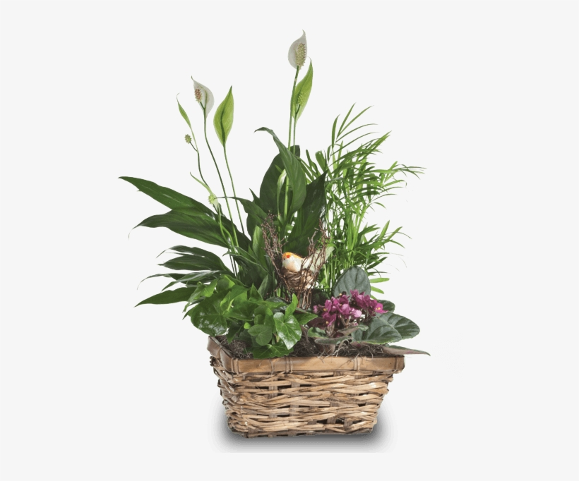 Songbird Planter, Modest - Dish Garden, transparent png #881921